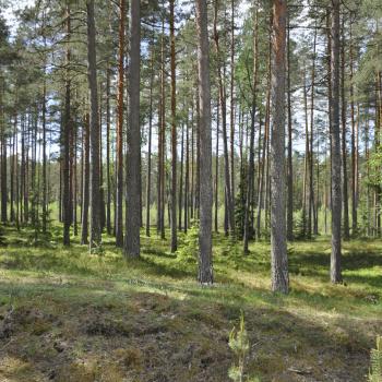 Glābsim Latvijas mežus!!!